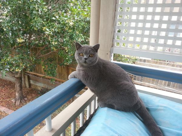 Sitter needed to care for our beautiful cat & homely Old Queenslander Cottage in Nundah!