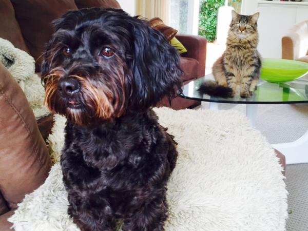 Cat/dog sitter needed for 10 days