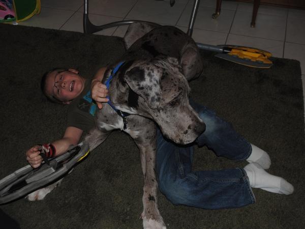 Dog And Cat Sitter Brisbane