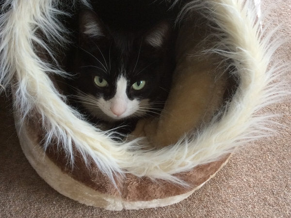 Pet sitter needed for one small cat in Milton Keynes UK