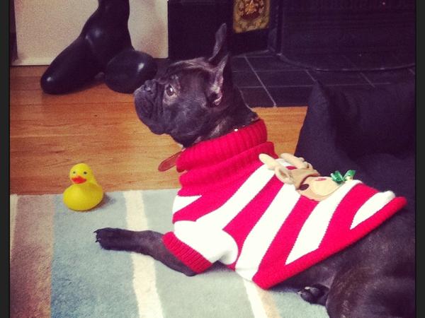 Dog sitter needed in Devon for 2 weeks, Christmas 2014