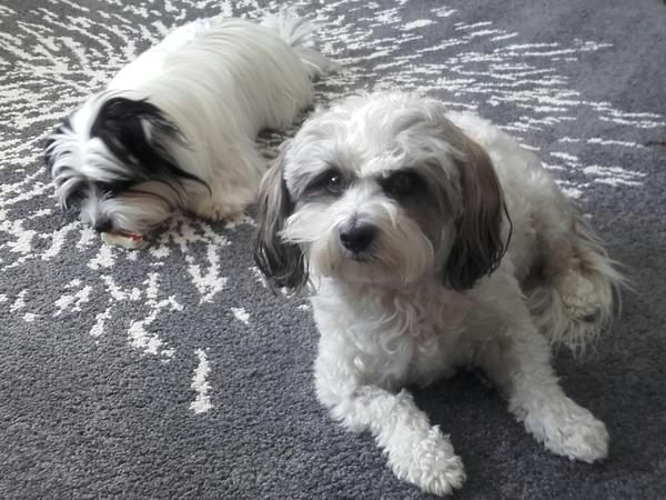 care for 2 small lovey dogs