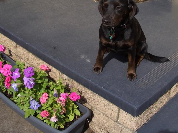 House/Dog Sitter