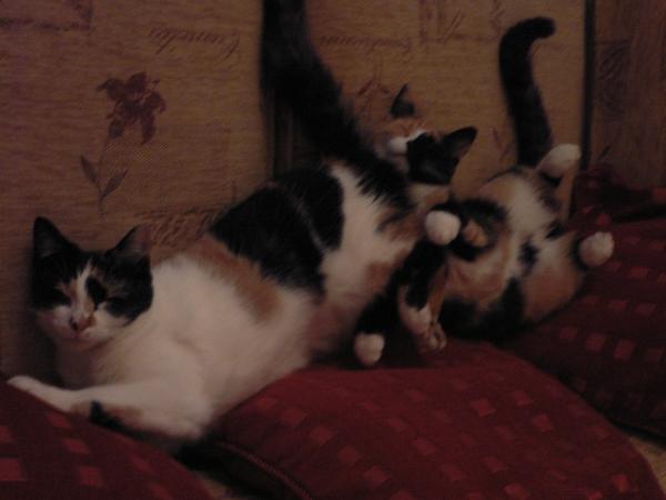 Sitters needed for 2 quiet cats in Harborne, Birmingham especially October 2017