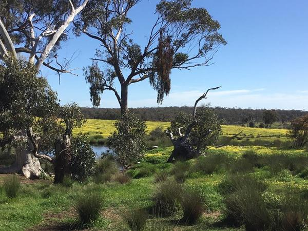 Housesitting assignment in Strathlea, VIC, Australia