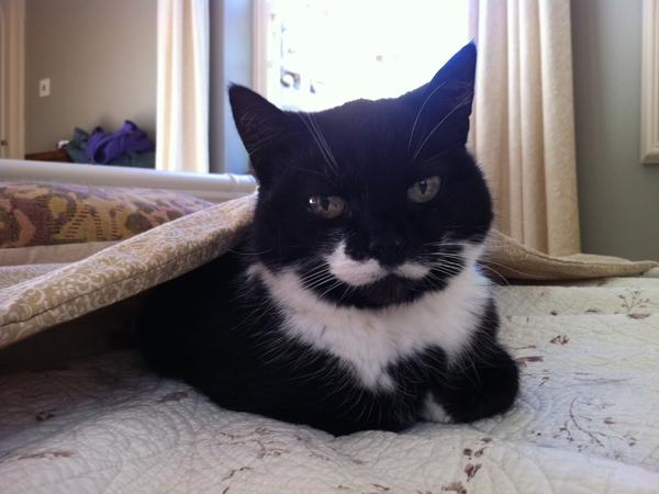 catsitter/housesitter urgently required Caton, Lancaster 23 Januaury 2014- 2 February 2014