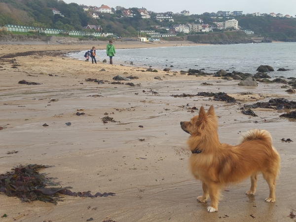 Dog/cat sitters needed for a week in April in pretty coastal Mumbles, Swansea