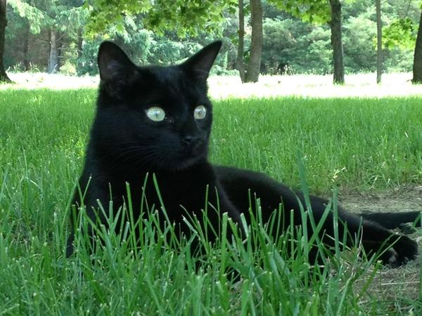 Looking for a sitter for our cat, Nox, in Northern Italy.