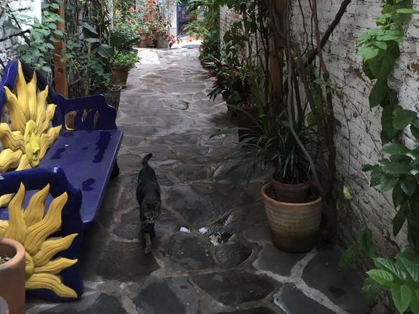 Two sweet cats in a lovely home near center of town