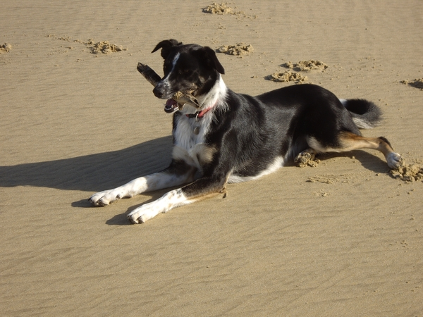 House and pet sitter required for dog,cat.fish and chickens for 10 days in France