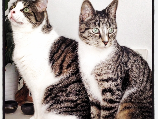 Care for two gorgeous but slightly nutty cats who live in a lovely place right near the beach!