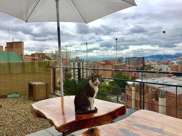 Housesitting assignment in Bogotá, Colombia