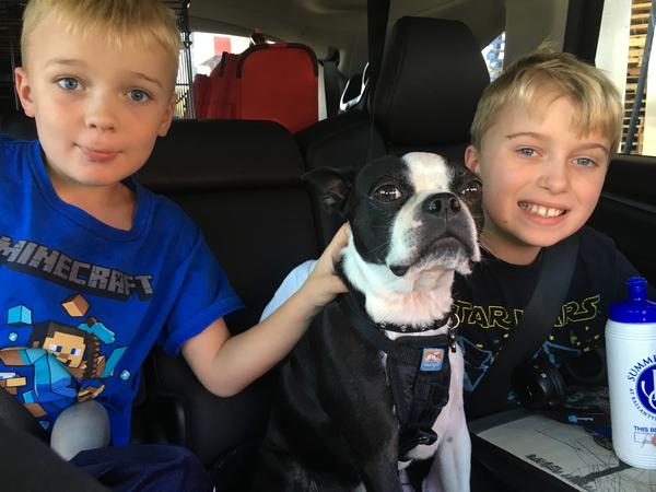 Housesitting assignment in Roswell, GA, United States