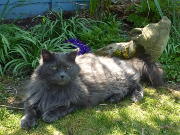 Petsitter needed for our beautiful and beloved cat