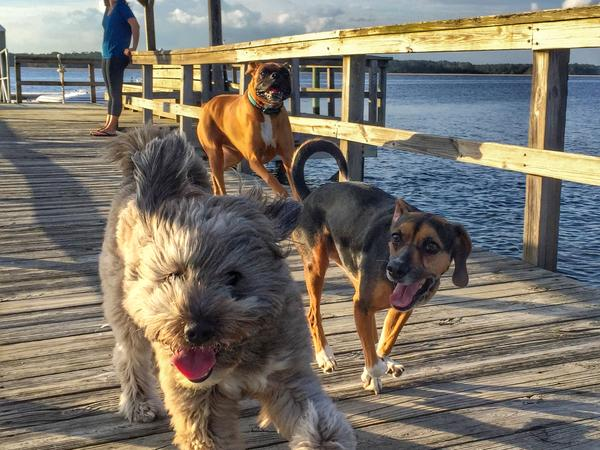 Housesitting assignment in Charleston, South Carolina, United States