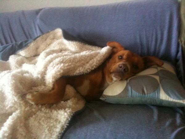 Pet sitter needed for 7 days in Sydney (Narrabeen), Australia