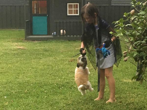 Housesitting assignment in Nelson Bay, NSW, Australia