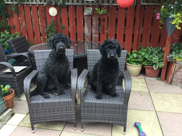 Housesitting assignment in Inverness, United Kingdom