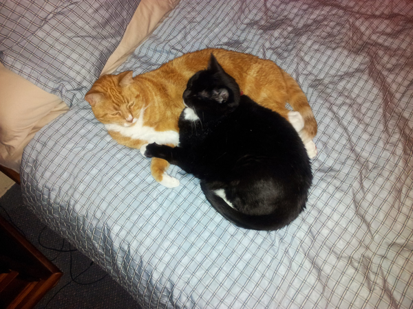 to look after unit and 2 cats while im away on holidays