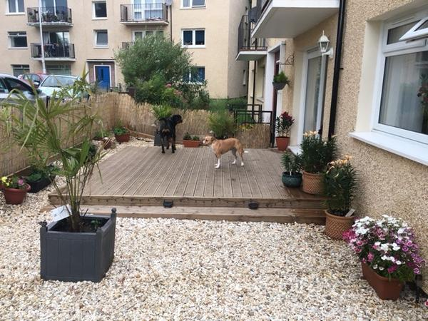 Pet and home sitter for 4 lovable dogs and a cat.