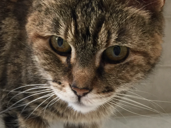 Keep Dale Cat Company in Lovely Manhattan Beach!