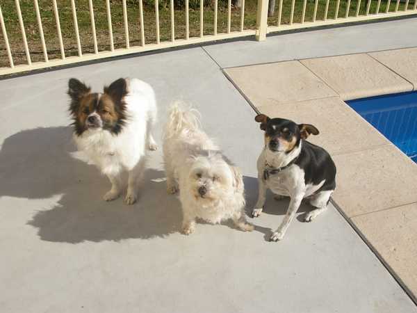 house/pet sitter required for 5 weeks
