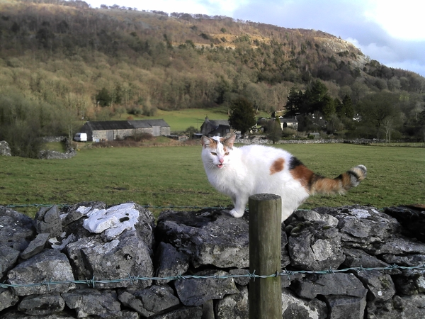 Pet-sitter needed for our cat at end of August in the Lake District