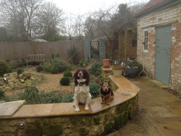 Housesitting assignment in Towcester, United Kingdom