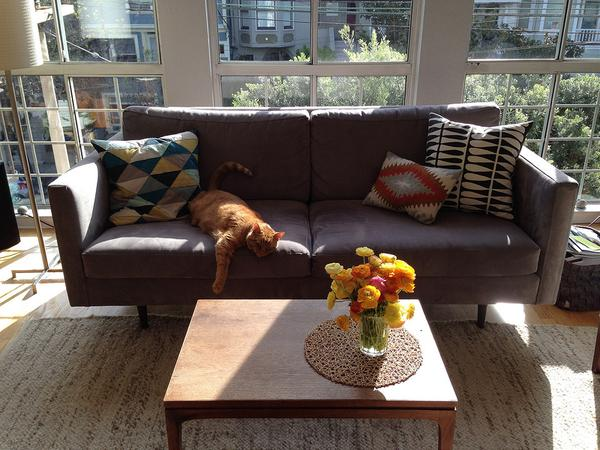 Stay with our rad AF cat, George, and enjoy beautiful San Francisco!