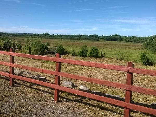 Housesitting assignment in Roscommon, Ireland
