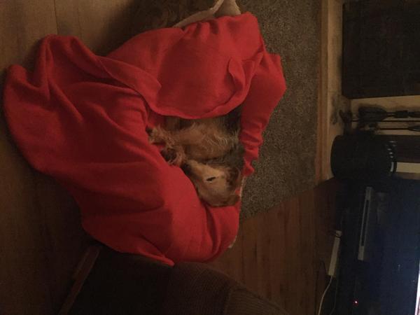 Pet Sitter for Old Dog