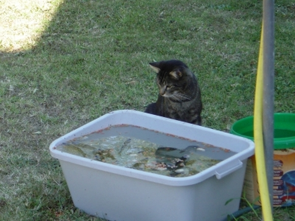 Cat sitter in the Dordogne - 4/5 weeks Dec 2012