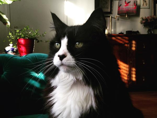 **CHRISTMAS** Cat sit for gentle, friendly cat in beautiful SE London