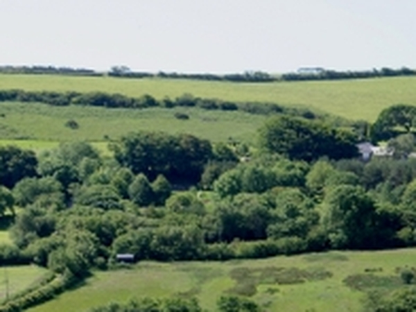 House sitter needed for 6 weeks in North Devon