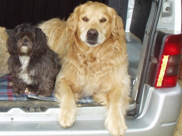 Dog and house sitter needed in South west France July/Aug