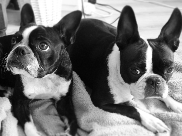 Dog/house sitter needed part-time over December/January 2016