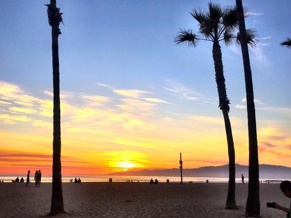 Housesitting assignment in Venice Beach, California, United States