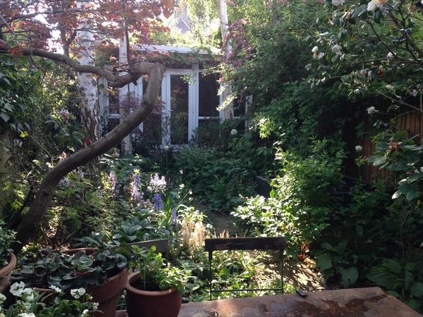 House sitting for lovely dog and cats in leafy London Fields, Hackney