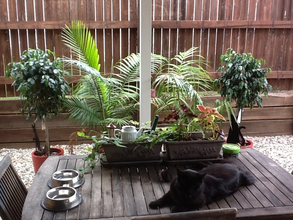 Spoilt Cat Needs A Week's Care!