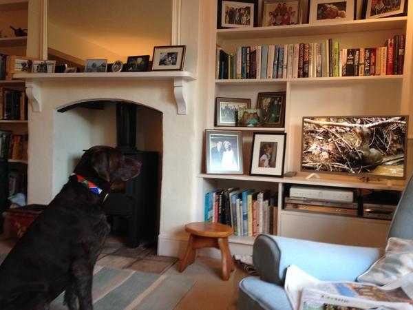Housesitting assignment in Southwold, United Kingdom