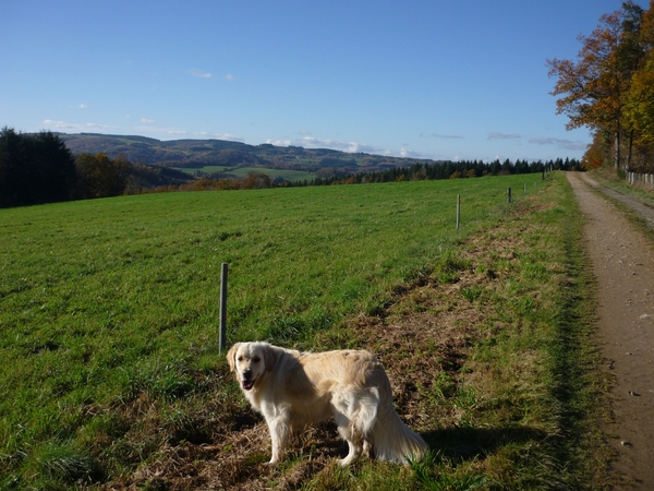 Housesitting assignment in Felletin, France