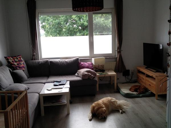 Housesitting assignment in Herent, Belgium