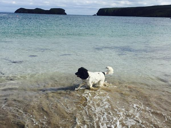Housesitting assignment in Isle of Lewis, United Kingdom
