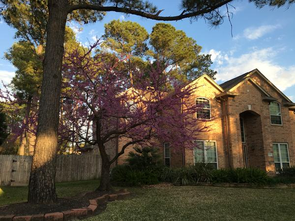 Housesitting assignment in Houston, TX, United States