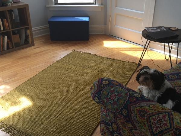 Housesitting assignment in Evanston, IL, United States