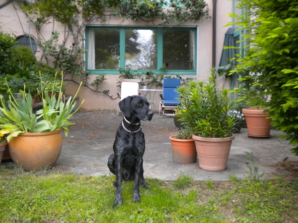 Dog-sitter needed for charming pointer in  equally charming  French Village  just outside Geneva  for  10 days in October