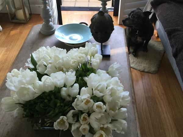 Housesitting assignment in Bronte, New South Wales, Australia