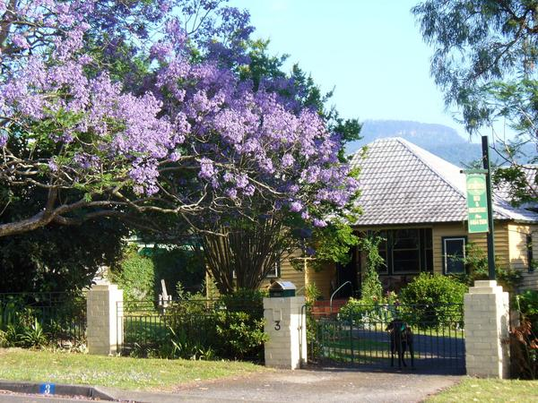 Housesitting assignment in Berry, New South Wales, Australia