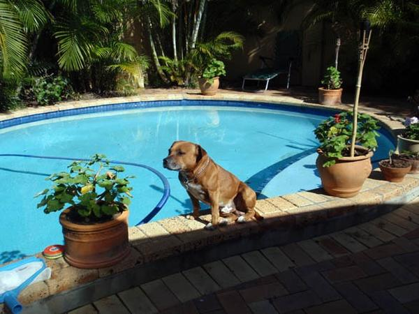 HOUSE & PETS SITTER DURING 2 WEEK HOLIDAY