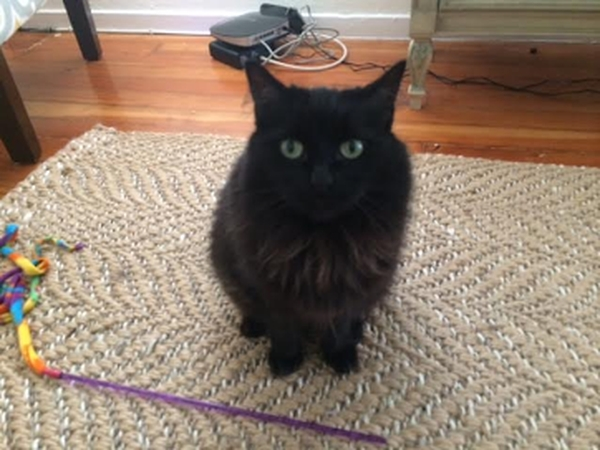 Housesit and Catsit in beautiful Los Feliz (Los Angeles)